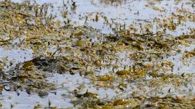 Algas verdes que movem-se na água calma filme