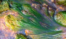 Algas verdes sob a água imagem de stock royalty free