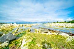 Algas verdes sobre a rocha branca do arenito em Kaihoura litoral imagem de stock royalty free