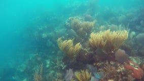Algas y corales coloridos debajo del mar agitado imagenes de archivo