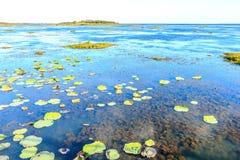 Alge en onkruid in lagunes Royalty-vrije Stock Afbeelding
