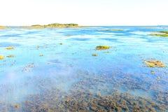 Alge en onkruid in lagunes Stock Foto's