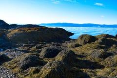 Alge op de kust van Trondheim, Noorwegen Stock Afbeelding