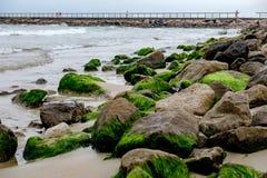 Algea盖了海滩岩石 免版税库存图片