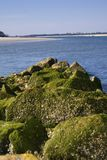 Algea covered jetties Stock Photography