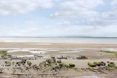 Algea covered mud banks at Beal beach Stock Photo