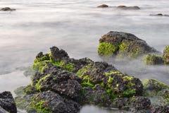 Algea on rocks in the lagoon of Mauritius Stock Photography