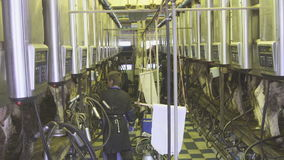 Algemeen plan geholpen beheer van het melken van melkveerassen stock videobeelden