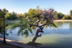 Algemeen San Martin Park Lake - Mendoza, Argentinië stock afbeelding