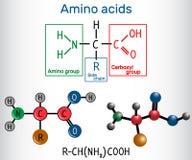 Algemene formule van aminozuren, die bouwstenen van pro zijn stock illustratie