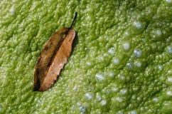algen Lizenzfreie Stockfotografie