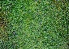 algen Lizenzfreies Stockfoto