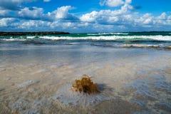 Algen auf dem Strand Stockfotos