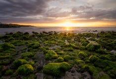 Algen auf Felsen bei Trois Bassins setzen Heilig-Leu in Reunion Island auf den Strand lizenzfreie stockfotos