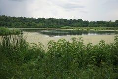 Algen bedeckten Teich in Illinios 2016 Stockbild