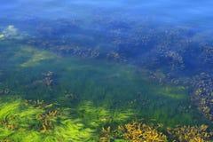 Algen in de oceaanbodem Stock Foto's