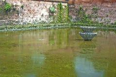 Algen deckten Teich ab stockfotos