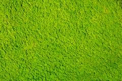 Algen, die in Abwasserteich schwimmen Stockbilder