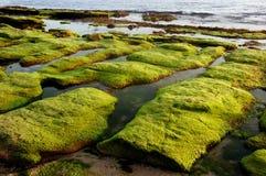 Algen in einer Seeseite. Lizenzfreies Stockbild