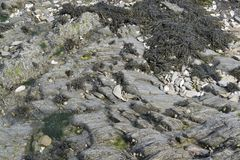Algen en rotsvorming stock foto