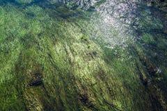 Algen en waterpest onder de stromende ondiepe stroom - 2 royalty-vrije stock foto
