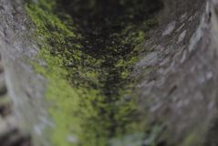 Algen-Fokus Stockfoto
