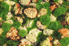 Algen im Fluss lizenzfreies stockbild