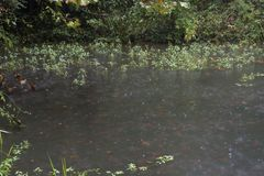Algen im Regen stockbilder