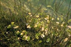 Algen im Wasser Stockbild