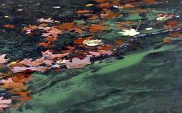 Algen und Blätter im Wasser Lizenzfreies Stockfoto
