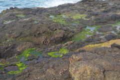 Algen und Gezeitenpools auf Felsen Stockfoto