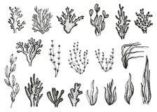 Algen und Korallen eingestellter Skizzenvektor vektor abbildung