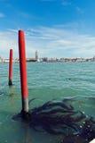 Algen und Meerespflanze auf dem Pier Venedig, Italien Stockfotografie