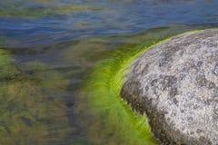 Algen verontreinigd water stock foto