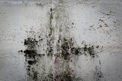 Algenflecke Lizenzfreie Stockbilder