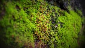 Algenmakroschuß auf einer Backsteinmauer lizenzfreies stockbild
