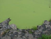 Algenwater dat rotsachtige dagzomende aardlaag ontmoet royalty-vrije stock afbeeldingen