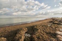 Alger på kusten Arkivbilder