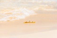 Alger på stranden Arkivfoton