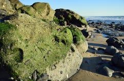 Alger täckte stenblocket på kust av Cress Street Beach i Laguna Beach, Kalifornien Arkivbild