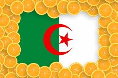 Algeria flag in fresh citrus fruit slices frame. Algeria flag in frame of orange citrus fruit slices. Concept of growing as well as import and export of citrus royalty free stock images
