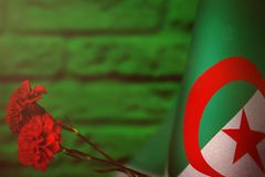 Algeria flag for honour of veterans day or memorial day with two red carnation flowers. Glory to the Algeria heroes of war concept. Algeria flag with two red stock image