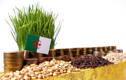 Algeria flag waving with stack of money coins and piles of seeds. Algeria flag waving with stack of money coins and piles of wheat and rice seeds stock photography