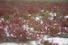 alghe fotografie stock