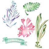 Alghe dell'acquerello messe illustrazione di stock