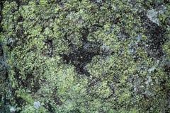 Alghe di Greem su struttura della roccia Fotografie Stock