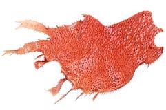 Alghe marine rosse fotografie stock