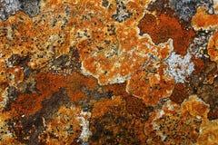 Alghe sulla pietra Fotografie Stock Libere da Diritti