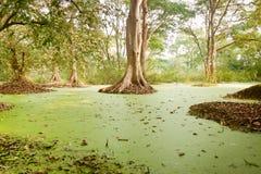 Alghe verdi dell'acqua nel lago dei santuari di uccello immagini stock libere da diritti