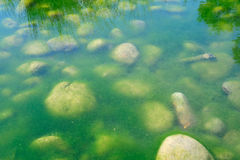 Alghe verdi dello stagno Fotografie Stock